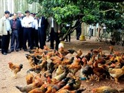No H7N9 virus found in Vietnam