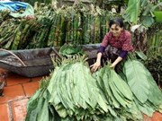 Hanoi strives to settle craft village pollution