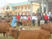 'Cow bank' project receives warm response