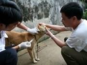 FAO to help Yen Bai prevent rabies