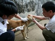 Vietnam moves to eradicate rabies by 2020