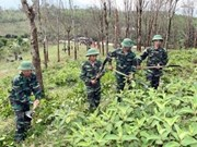 Vietnam seeks int'l support to clear bombs, mines