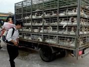 Poultry, livestock diseases put under control
