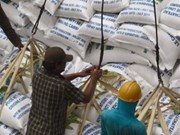 Cambodia's rice export strongly increases