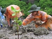 Students plant mangrove trees in Ha Long Bay