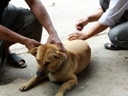 World Rabies Day observed in Vietnam