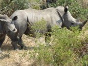 Workshop shares rhino protection information