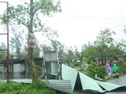 Storm Nari: economic loss nears 16 trillion VND