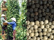 Pepper industry aims 1 billion USD annual export target