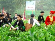 Vietnam's tea products in spotlight at seminar
