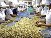 Dong Nai earns 24 mln USD from cashew nut oil exports