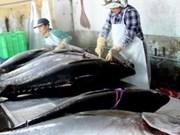 Tuna export to EU rockets