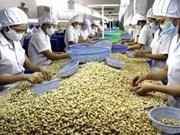 Vietnamese cashew nut exports rocket in 2013