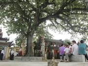 45 species recognised as heritage trees