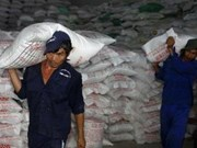 Export rice prices increases sharply in November