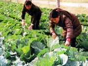 Canada helps Vietnam produce safe food