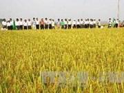Brunei hopes to cultivate Vietnam's rice varieties