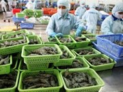 Vietnam ranks third in shrimp exports