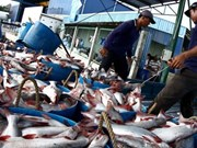 Fisheries look to net more exports on surging value