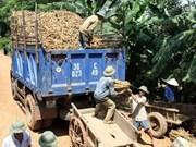 Cassava exports slide back in 2013