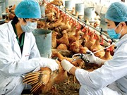 Gov't orders tightened measures to prevent bird flu
