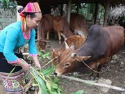 Oxfam Vietnam launches poverty reduction project