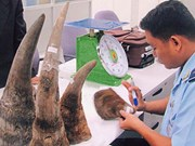 Medical opinion could help save rhinos: experts