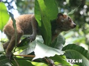 Vietnam attaches importance to protecting endangered wildlife