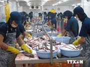 Mekong Delta's tra fish farming area down 19 percent