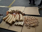 Smuggled African ivory seized at southern airport