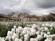 Vietnam, Africa cotton industries eye closer links
