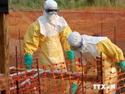 Vietnam takes measures to prevent Ebola disease