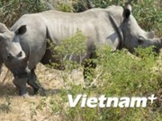 Social organisations called to join rhino protection efforts