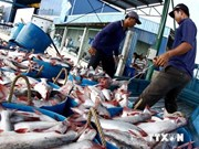 First Tra fish farmers receive GLOBALGAP certificate