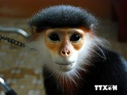 Primate conservation faces challenges: int'l conference