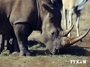 Media urged to work more to stop rhino killing