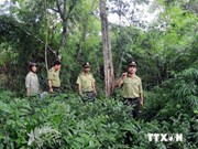 Tuyen Quang completes yearly reforestation plan