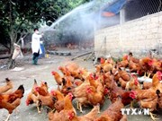 Quang Tri, Quang Ngai asked to brace for A/H5N6 virus