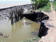 Ca Mau sea dykes threatened by landslides