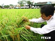 Conference reviews production of certified rice seeds