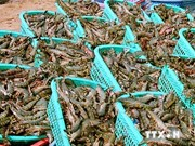 Vietnam looks to lift shrimp industry