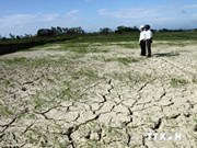 Drought a prominent threat to Ninh Thuan