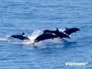 Vinpearl joins endangered species conservation efforts