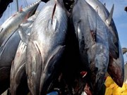 Advanced tuna fishing methods to be expanded
