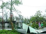 Typhoon Kalmaegi floods large area of rice fields
