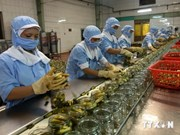 Vietnam promotes agro-forestry-fishery products in Egypt