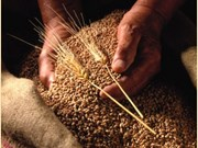 Australia sees grain opportunities in Vietnam
