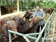 1,000 cows donated to the needy in Lam Dong