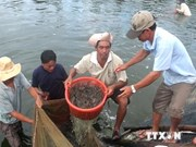First Vietnamese shrimp farm meets sustainability standards