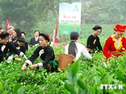 New body to facilitate revival, growth of tea industry